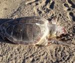 θαλασσια_χελωνα