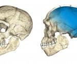 homo-sapiens-arxaiotero-kranio