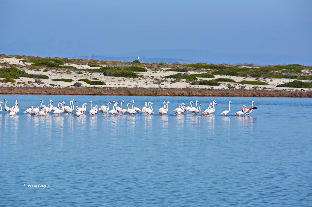 3_flamingko_Lefkada