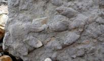 dinosaur-footprint