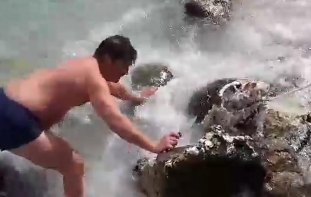 χελωνα