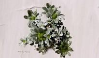 2_Filago pygmaea
