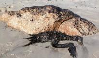 2_Prestige_oil_spill