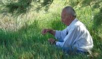 2_Salicornia