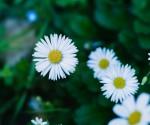 Lefkada flowers in nature (4)