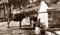 vrysi_Pasa_1959