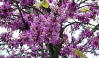 64_lefkada_aprilis